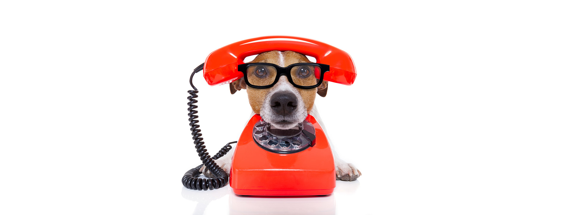 Dog-On-The-Phone-re-size